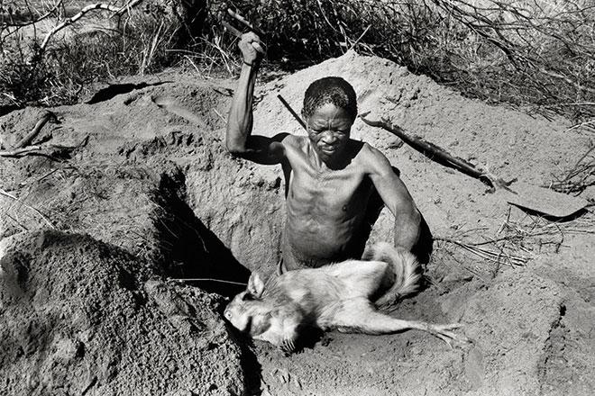 Old Kaece, a San hunter, clubs a captured hare to death near Makuri village.
